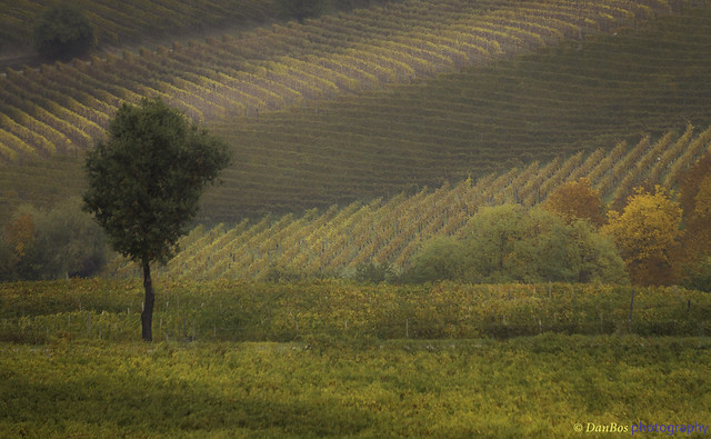 Langhe - Piedmont (Italy): Autumn Colors