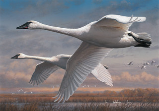 2015 Federal Duck Stamp Contest Entry 052 | by USFWS Headquarters