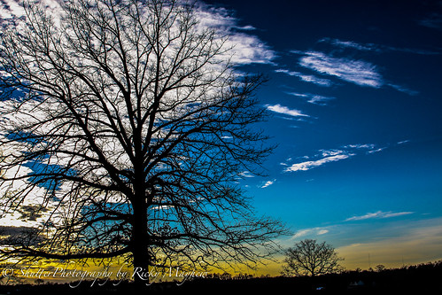 blue trees sunset sky gold canon50d yourbestoftoday
