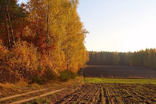 road autumn trees fall nature forest landscape gold golden woods view path poland polska fields indiansummer polishgoldenautumn