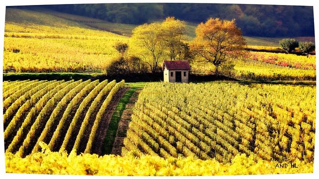 Le vigneron a souvent dans sa vigne une «tonne», une cabane où il met à l'abri ses outils et les échalas qu'il enlève après la vendange. Traditions d'Auvergne Henri Pourrat