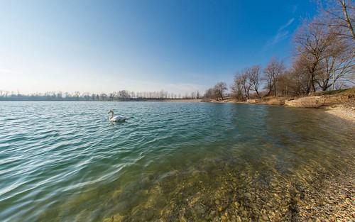 autumn autumnmorning lakes swans lakezajarki zaprešić croatia birds hrvatska nikond600 sigma1528fisheye fisheye animals animalplanet