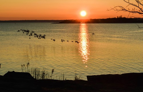 sunrise morning longislandsound water birds flock nikond5300 newyork westchester flight outdoor silhouette