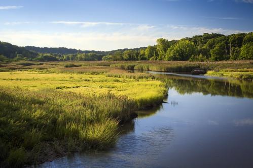 nyc morning trees sky newyork nature water grass clouds landscape pond queens grasses marsh saltmarsh sawgrass