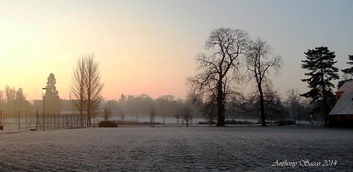 omot uk england reading winter berkshire trees