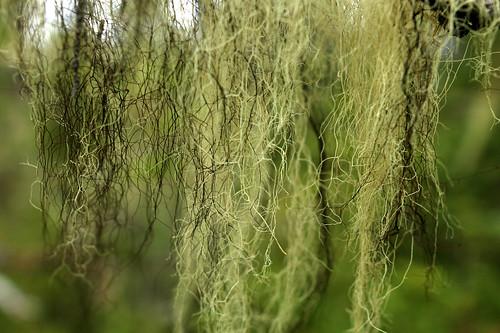 Lichen | by NathanaelBC