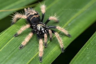 PA230053b | by Arachnida Moments