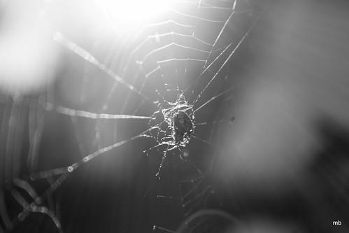 Spider.... | by magnusbjorns