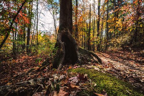 atl atlanta localparks parks lawrenceville georgia unitedstates us tree hallow trail lazy easy
