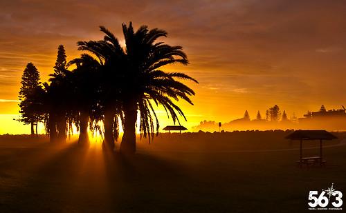 morning travel tree sunrise cloudy australia newsouthwales portmacquarie