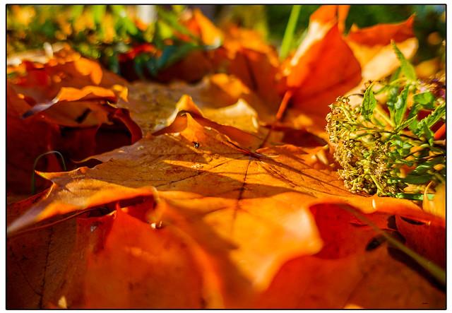 Der Herst kommt - The autumn is coming