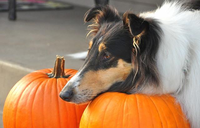 Lady's Pumpkins