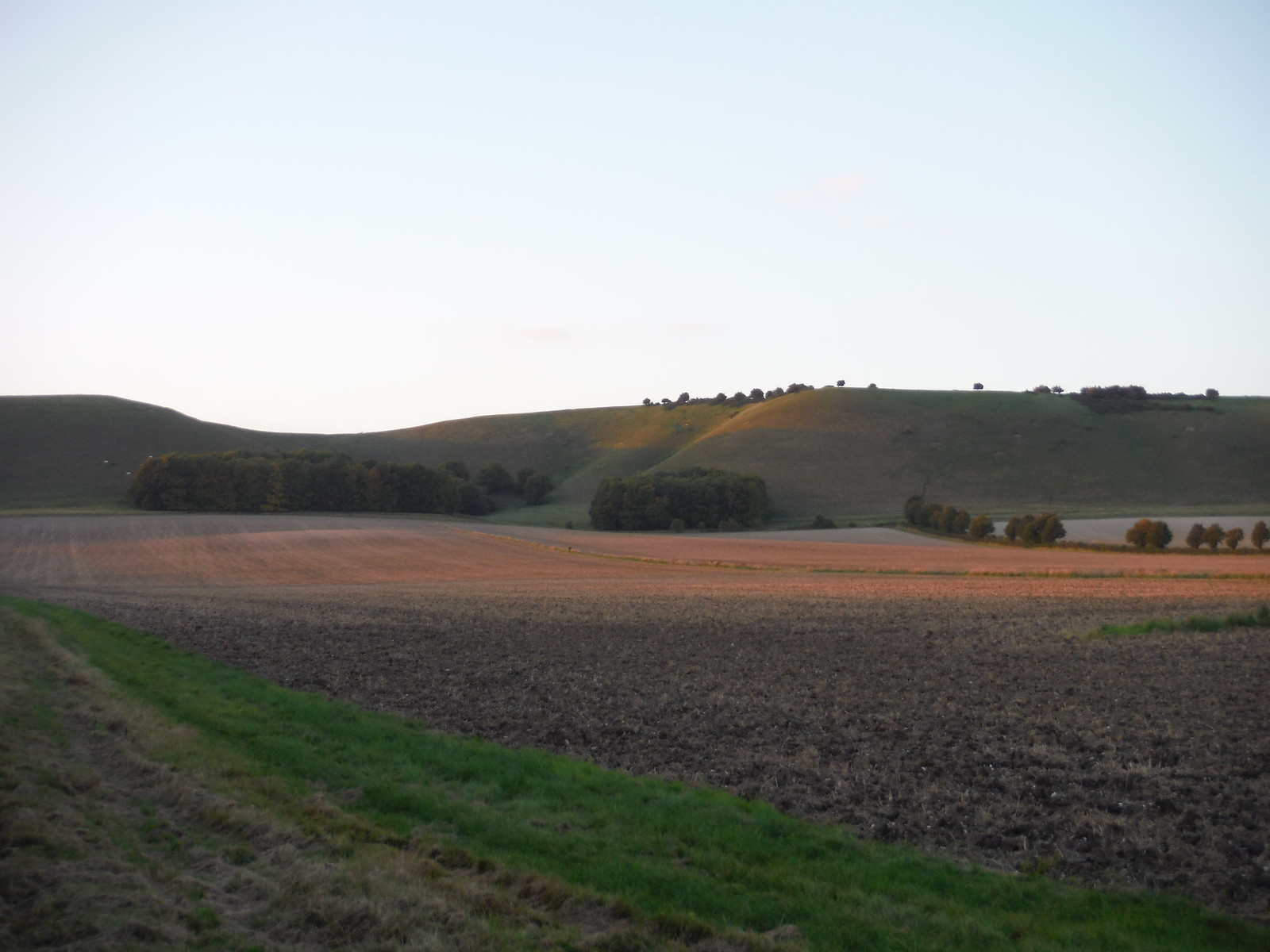 Golden Ball Hill in the evening glow SWC Walk 127 Pewsey Circular
