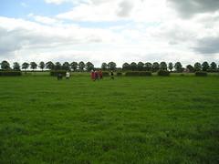 Boerengolf 2006