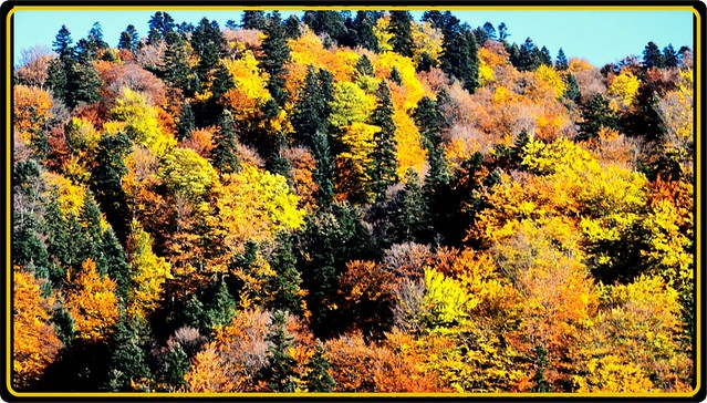 Carpathians(Bucegi) mountains: golden autumn
