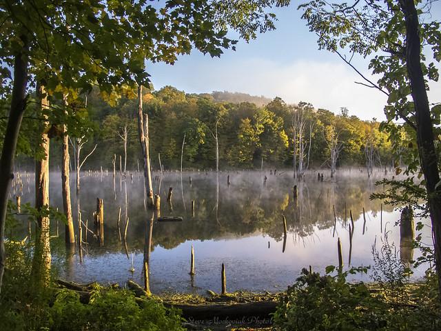 Monksville Misty Morning_3595