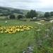 Yorkshire Tour de France