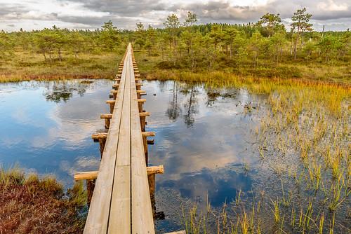 landscape nikon estonia swamp d750 marsh moor landschaft f28 afs mire estland 2470mm nikonafs2470mmf28 nikond750
