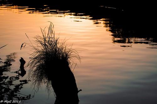 zen shadows tervuren belgique belgium art colors sunset sundown pastel myg nikon afsvrzoomnikkor70300mmf4556gifed d90 grass contrast minimal minimalism decay lac water eau mygphotographiewixsitecommyg2017