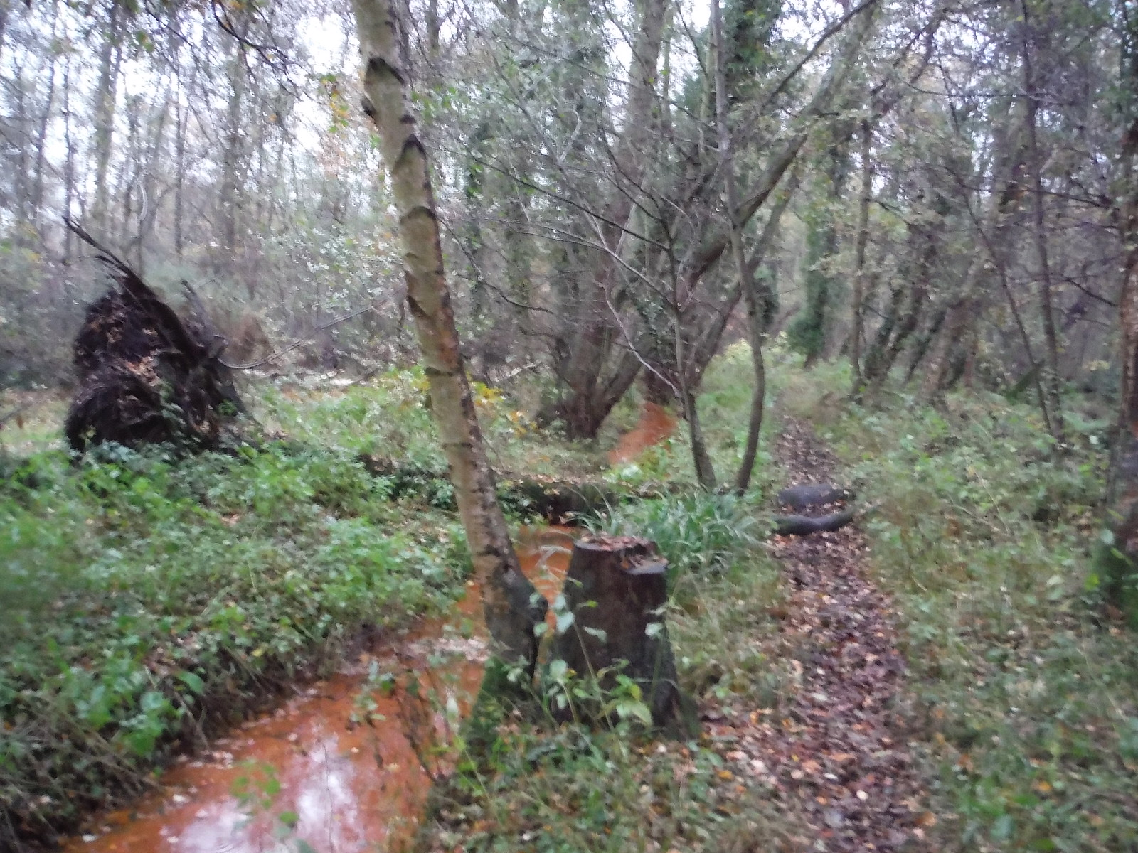 Path through Flitwick Moor SWC Walk 232 Lidlington to Flitwick