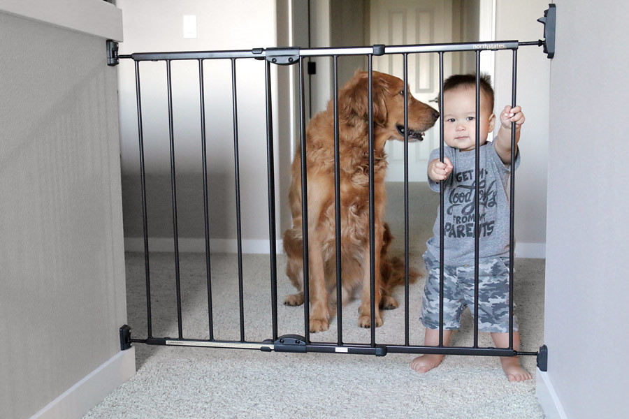 North States black metal baby gate with dog and baby | Flickr