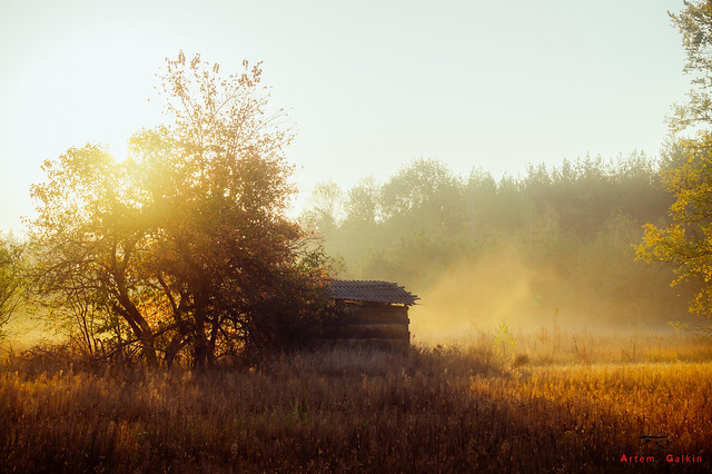 Just early morning on the farm