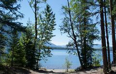 Montana Glacier NP Fish Creek open carry (#0199)