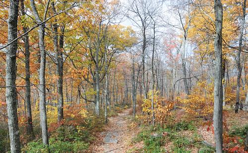 autumn fall forest virginia us unitedstates luray georgewashingtonnationalforest stricklerknob