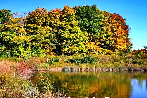 autumnlandscape beautifulday bluesky scenics landscape water pond trees fallcolours reflections autumn ccphotoworks