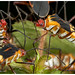 Plant Bugs / Chinches by Panama Birds & Wildlife Photos