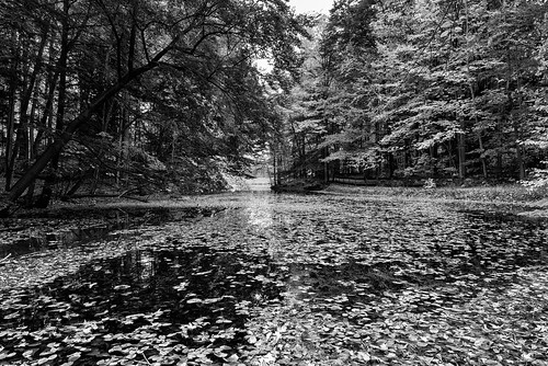trees blackandwhite bw fall leaves landscape mono pond nikon nikond810 240700mmf28