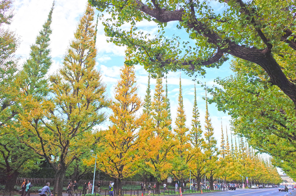 Ginkgo street color changing