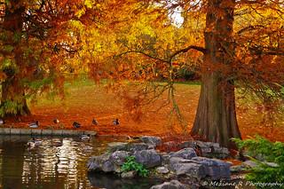 Parc Barbieux ( Nord France )