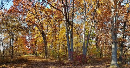 oak forest near nankin lake westland michigan