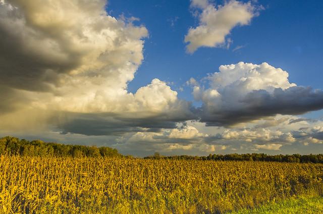 fantastic sky in rural Michigan  (Explore)