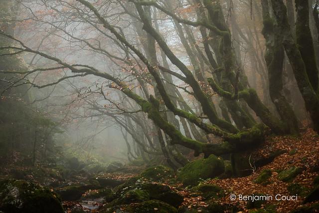 Autumn in the Fog