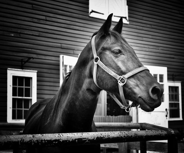 Horse (Michigan)