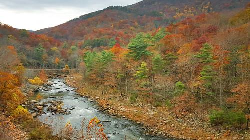 fall colors river pass preserve goshen naturalarea