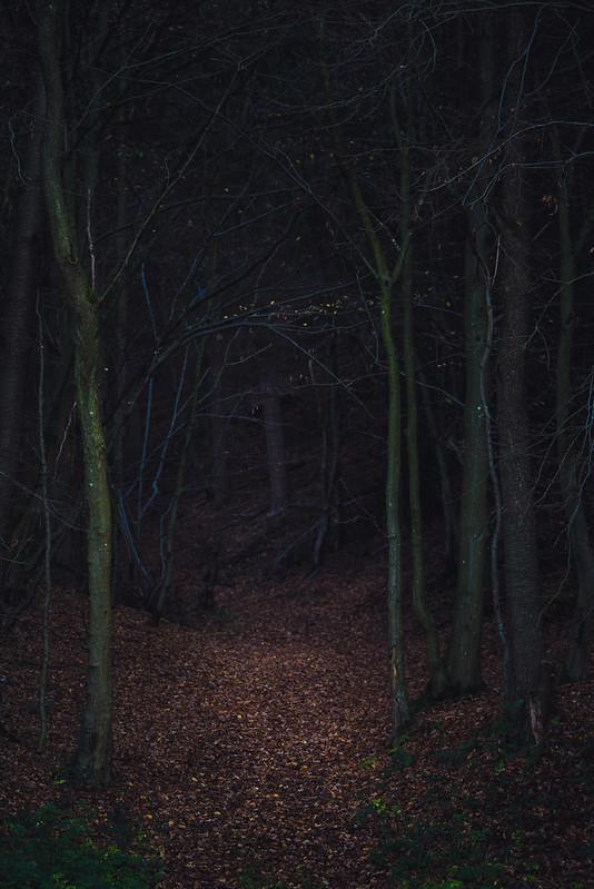 Das Tor zum Dunkelwald
