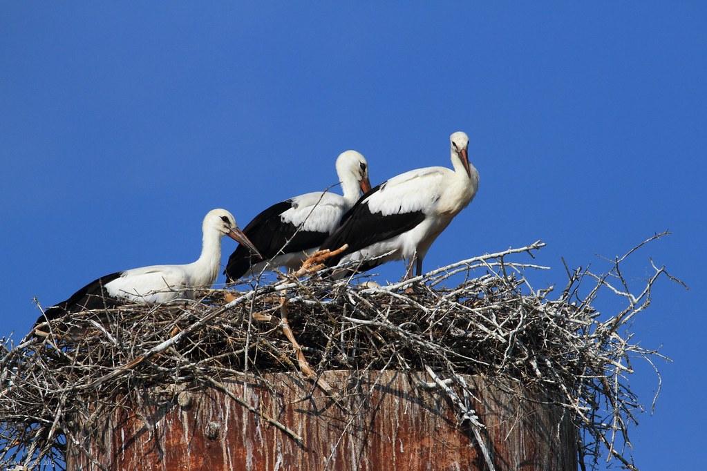 3_Storks Nest