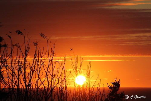 SUNSET OVER  ST. LAWRENCE RIVER  |   REFORD GARDENS   | LES JARDINS DE METIS  |  COUCHER DE SOLEIL  |   GASPESIE  |  QUEBEC   |  CANADA | by C C Gosselin