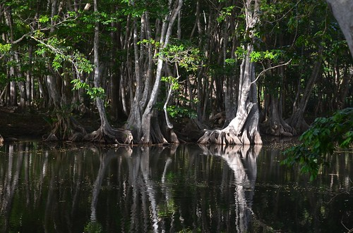 Swamp Trees - doubled! | by rosch2012