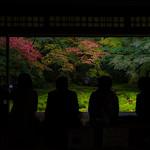 Garden of 瑠璃(Ruri)