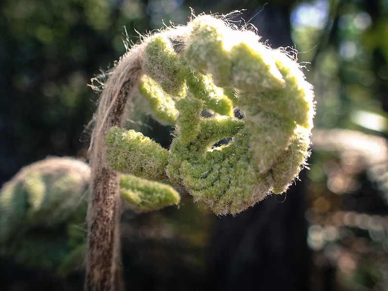 Jacksonville Arboretum Macros