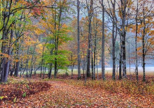 iphone gsmnp nc wnc northcarolina greatsmokymountainsnationalpark landscape nature autumn fall