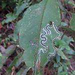 Mi, 26.08.15 - 12:59 - Wanderung Catarata de Cocta