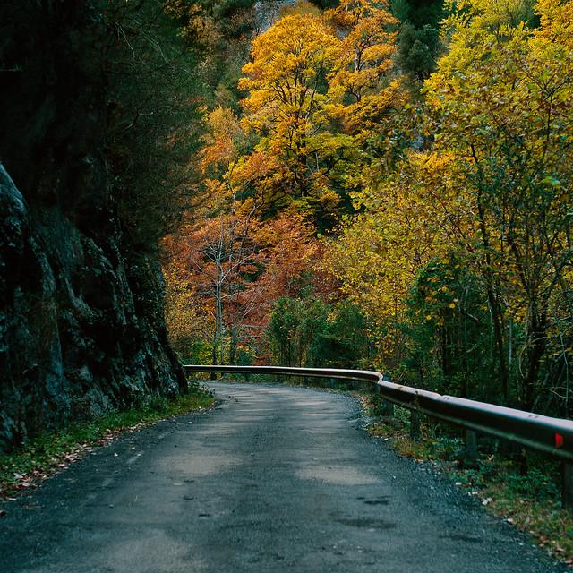 Diez fotos hechas ayer. Carretera de Añisclo