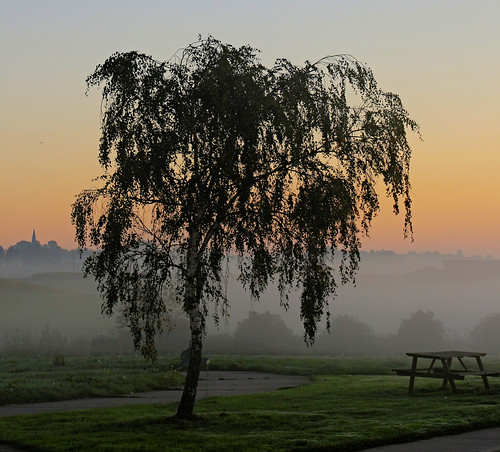 morning sunset sky orange mist tree fog sunrise nebel belgium dusk himmel sonne sonnenaufgang baum belgien dunst