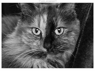 #cat #spooky | by GriAslan