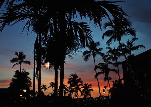 trees sunset clouds america canon eos twilight sundown florida silhouettes sunsets palmtrees naples sunsetting 2015 kendowdall